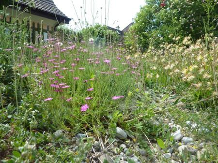 Spazio rurale nell'ambiente urbano
