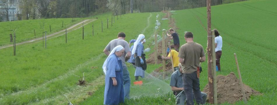 Obstbaumpflanzung kloster fahr progetti naturnetz for Progetti di piantagione