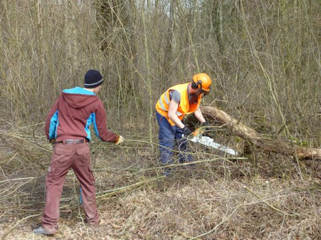 Fachgerechte Waldrandpflege