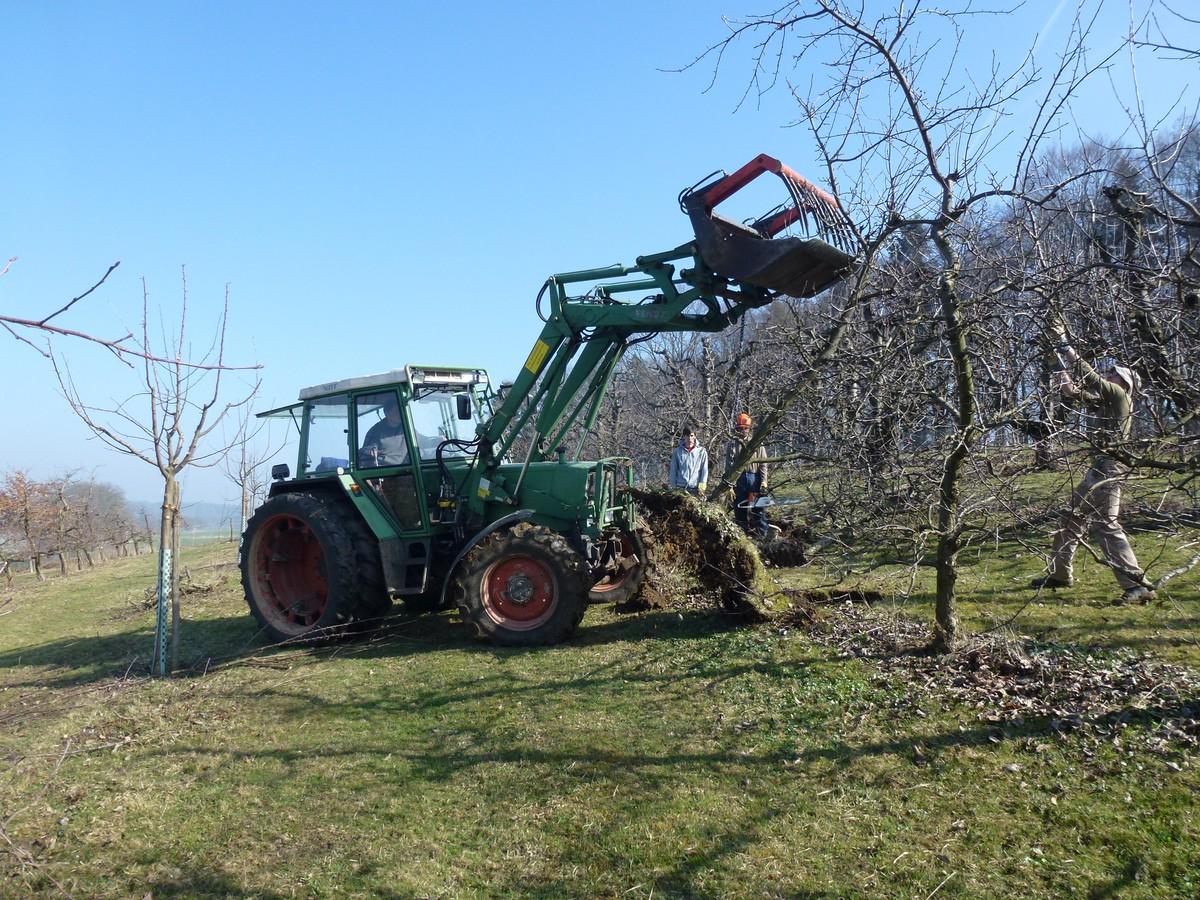 Obstgartenaufwertung sch rhof progetti naturnetz for Progetti di piantagione
