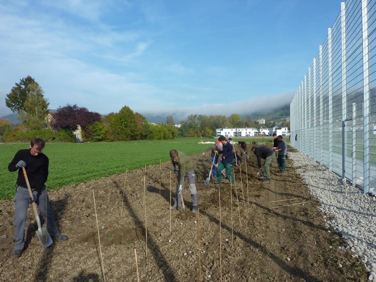 Heckenpflanzung zelgli progetti naturnetz for Progetti di piantagione