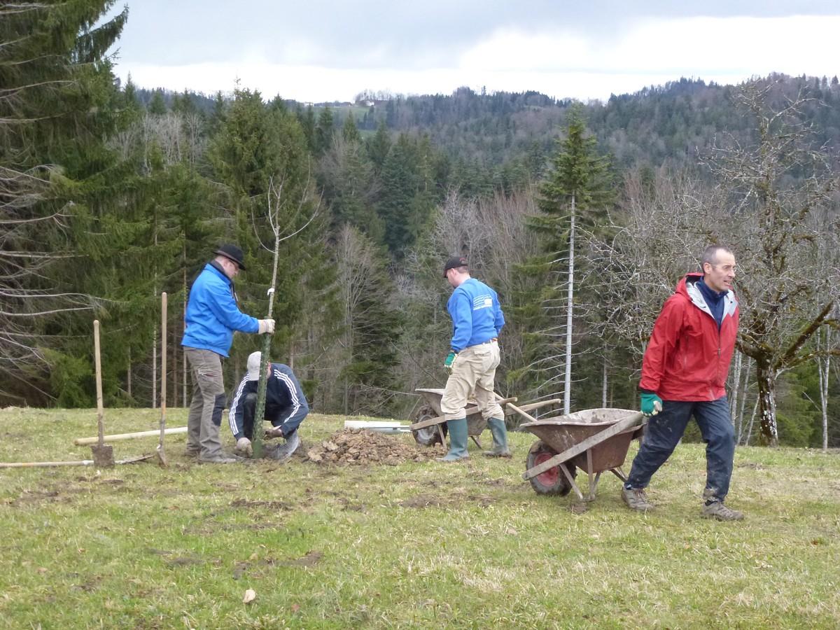 Obstbaumpflanzung und biotoppflege sternenberg 2013 for Progetti di piantagione