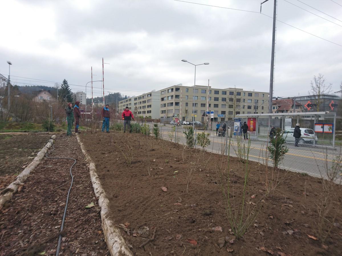 Entbuschung und aufwertung parzelle im grund progetti for Progetti di piantagione