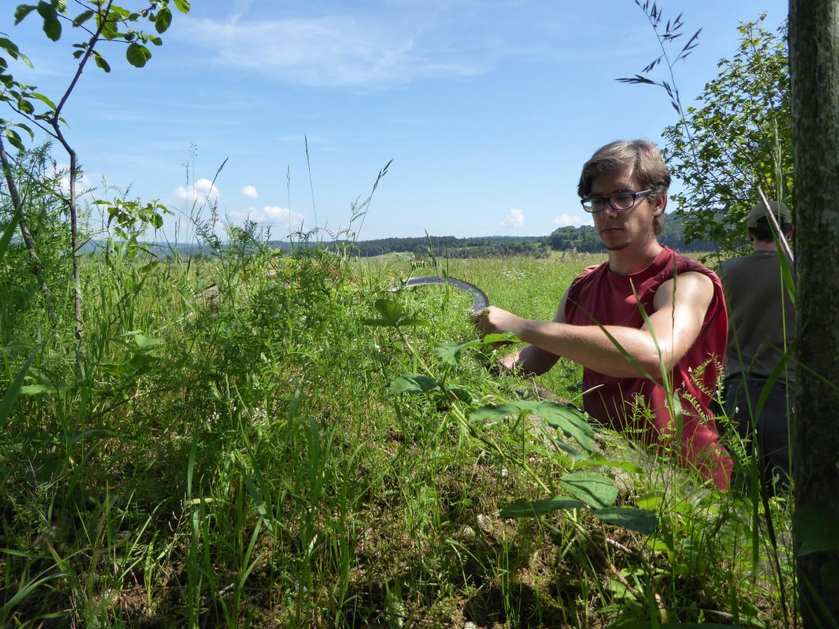 Aufwertung panzersperre progetti naturnetz for Progetti di piantagione